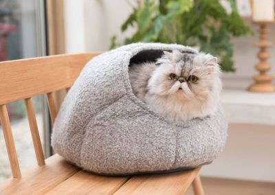 Cat in Bed - My Pet Warehouse TOK H