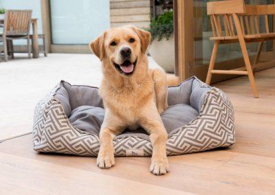 Happy Dog - My Pet Warehouse TOK H