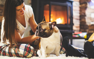 Winter Entertainment Ideas for You and Your Pets!